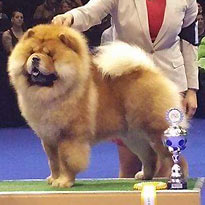 Champion King of Egypt de Los Perros de Bigo