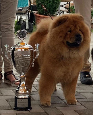 Champion Nala de Pere Glass